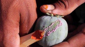 مبارزه ازبکستان و افغانستان جهت تضعیف تجارت مواد مخدر