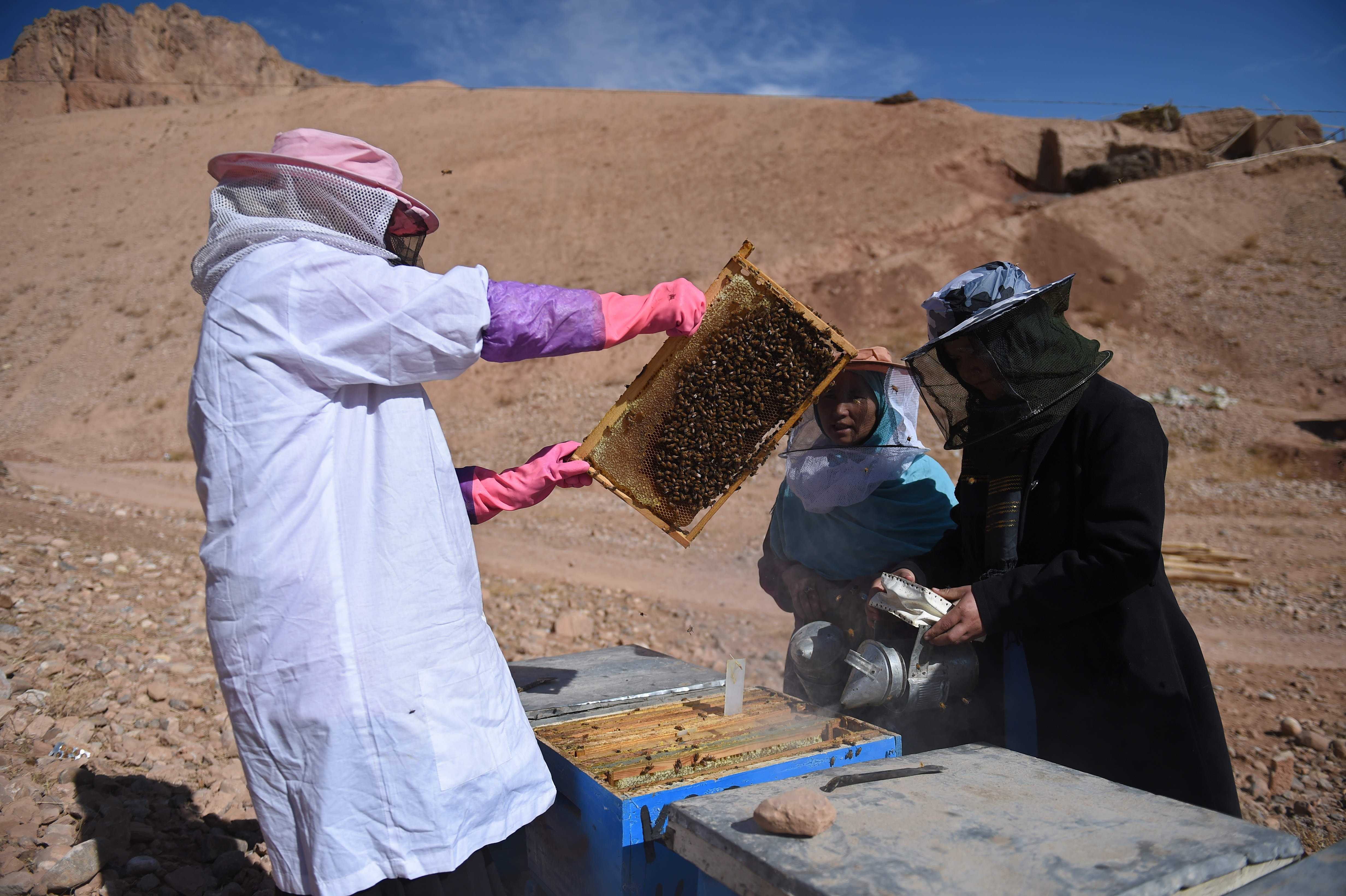 Honey business allows Afghan women more freedom, respect