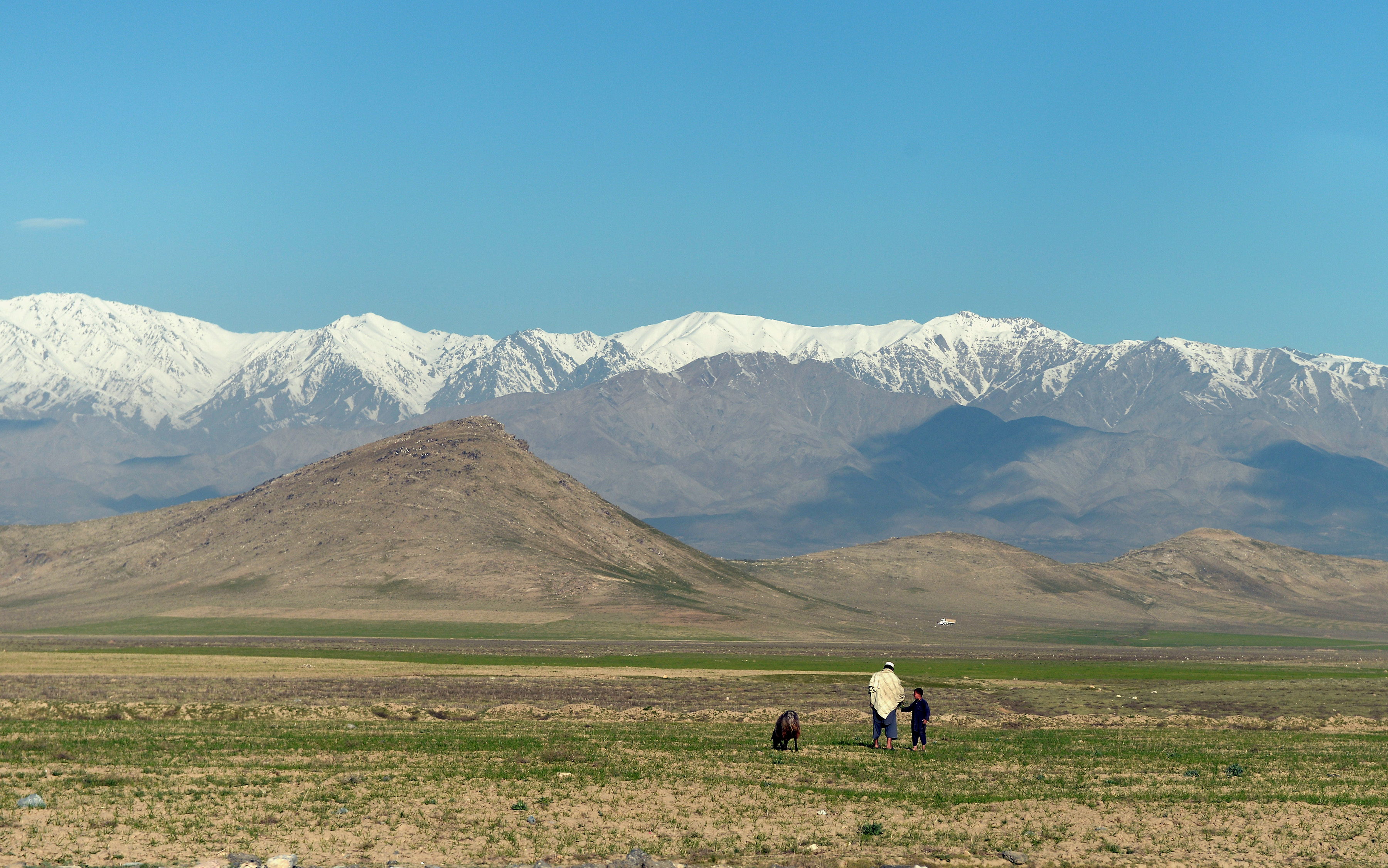 استهزاء فراخوان درختکاری طالبان در سراسر افغانستان