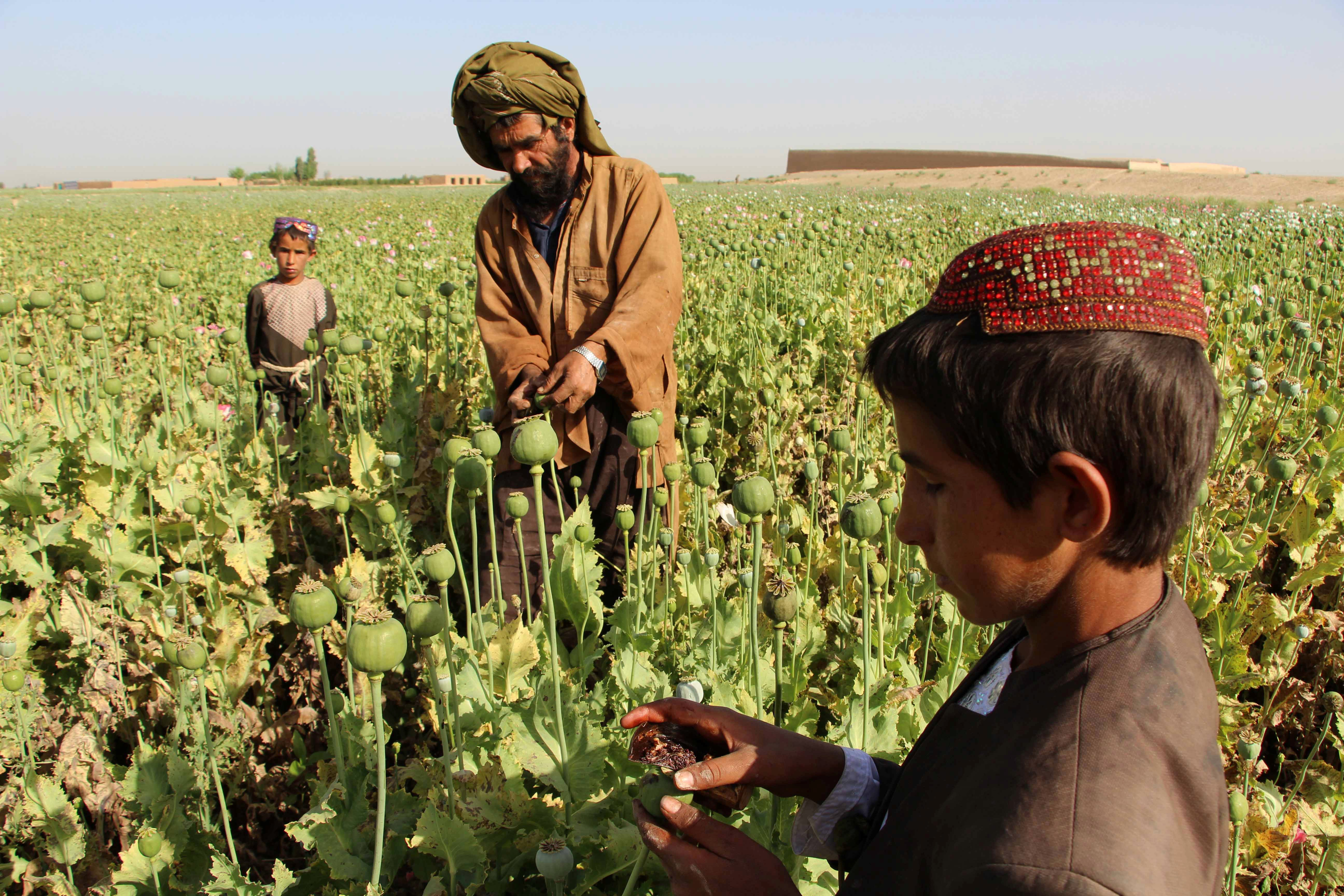 Afghanistan attempts to counter drug use through sports