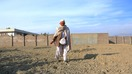 Faqirullah, 60, sows wheat as an alternative crop in Surkh Rod District December 17. Afghan troops destroyed his poppy crop in December. [Khalid Zerai]
