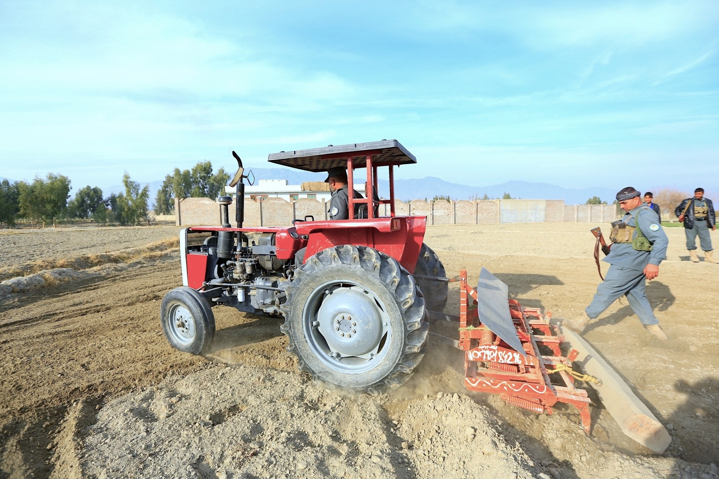 Surkh Rod District Police Chief Abdul Rahman Khalilzai December 17 drives a tractor to destroy poppy fields in his district in Nangarhar Province. [Khalid Zerai]