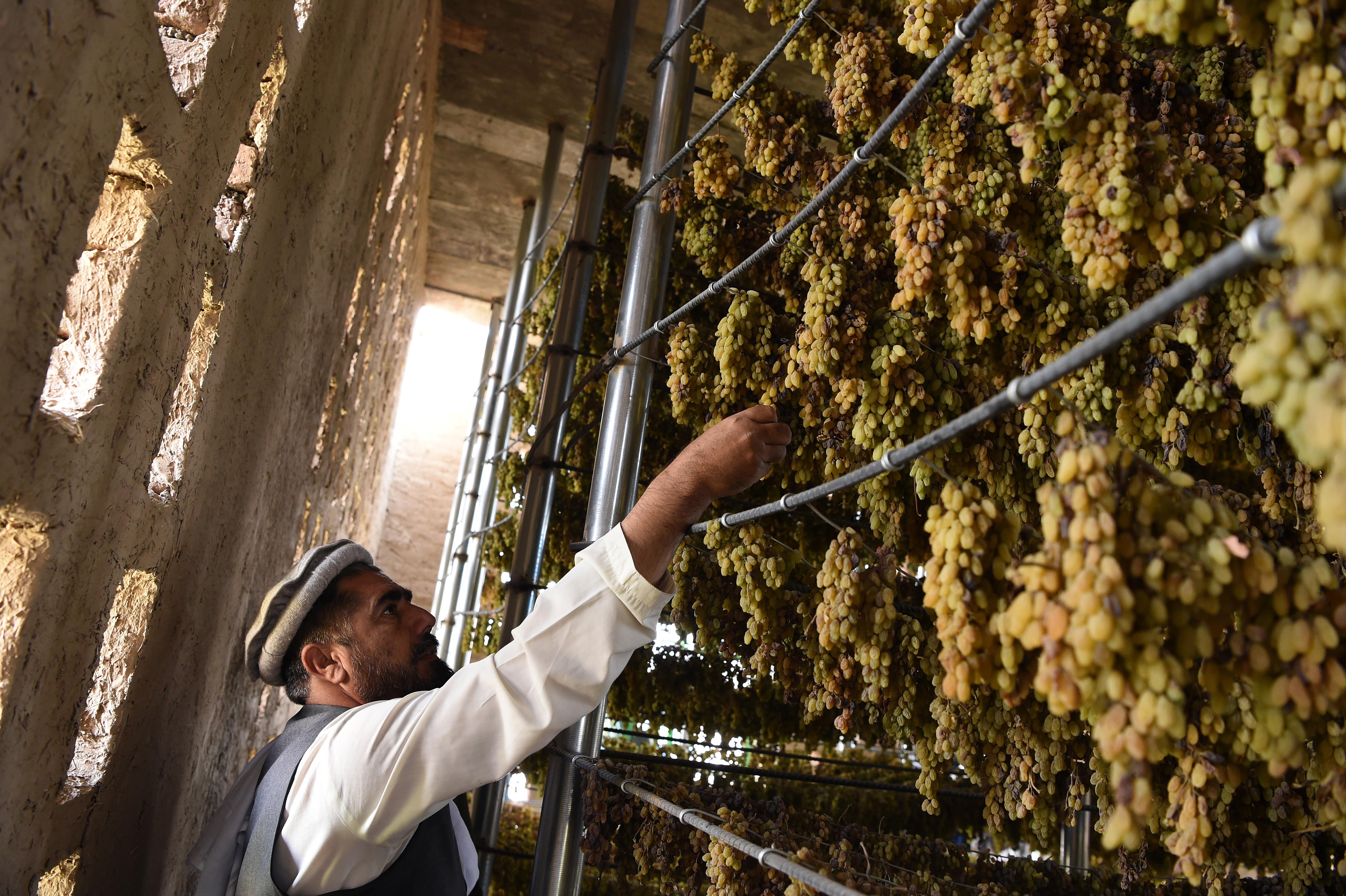 Afghanistan revamps traditional raisin houses