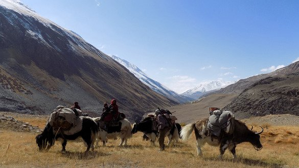 This picture taken last October 7 shows ethnic Kyrgyz nomad families travelling on yaks in the Wakhan Corridor in Afghanistan. [Gohar Abbas/AFP]