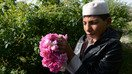 Afghan farmers smell sweet success choosing roses over poppy