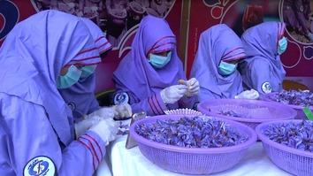 افغان کروندګرو د حکومت له خوا د زعفرانو په وارداتو باندې د بندیز هرکلی وکړ