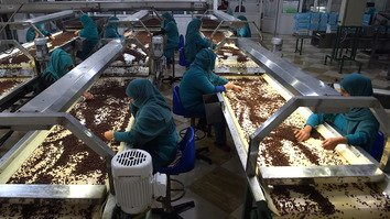 Afghan women work in a raisin factory on the outskirts of Kabul October 22, 2017. [Shah Marai/AFP]