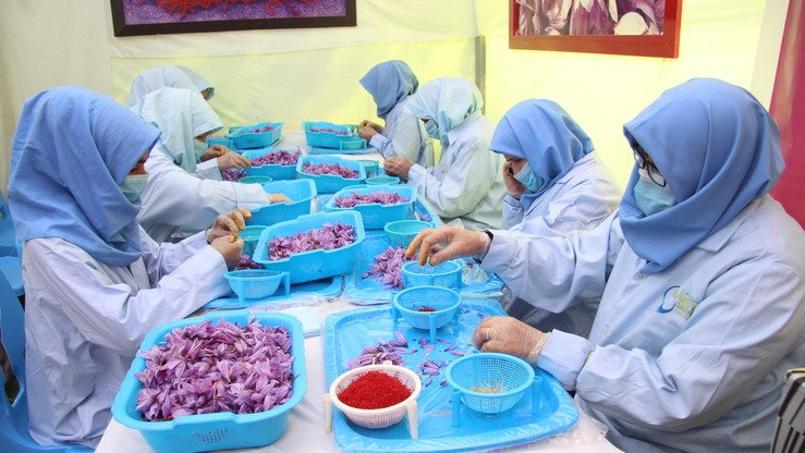 Workers clean and sort saffron flowers in Herat Province November 11. [Omar]