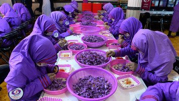 Workers separate saffron threads from harvested flowers at a processing centre in Herat Province November 12. [Hoshang Hashimi/AFP]