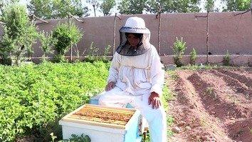 زنان افغان در تجارت زنبورداری طعم توانمندسازی را می چشند