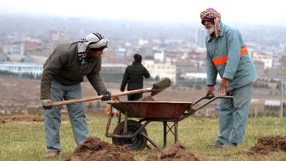 Residents of Herat city prepare the ground before planting saplings in the suburbs March 2. [Omar]