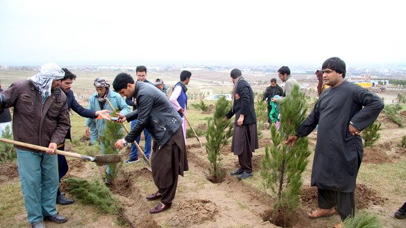 Residents of Herat city plant saplings in the suburbs March 2. [Omar]