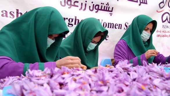Workers clean and sort saffron flowers in Herat Province last November 11. [Omar]