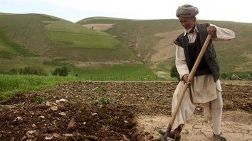 طالبان از یک دهقان معیوب بخاطر ندادن عشر در سرپل سر بریدند