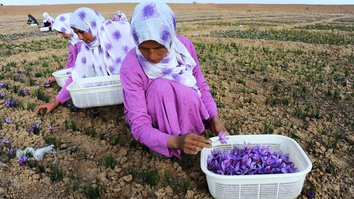 Afghanistan to boost saffron production as demand grows