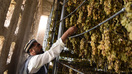 Afghanistan revamps traditional raisin houses