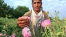 Nangarhar farmers choose roses over poppy, avoid funding Taliban
