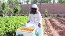 Afghan women get a taste of empowerment with beekeeping businesses