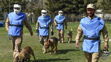 In photos: The dogs who sniff out explosives in Kabul