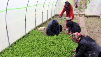 Greenhouse project helps thousands of Afghan women sow a better life