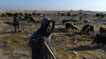 Severe drought forces Afghan shepherds to take desperate measures