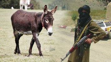 Afghans mock Taliban for executing 'infidel' donkeys in Ghor
