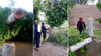Trees along Kunduz highway become latest casualties in Taliban's war