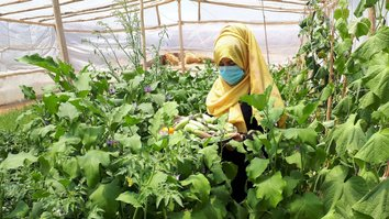 Government-backed horticulture project creates jobs for thousands of women in Balkh